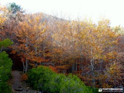 Hayedo Tejera Negra; excursiones en madrid cerezo en flor valle del jerte bola del mundo navacerrada
